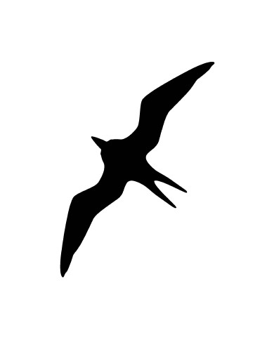 Bird 1 image