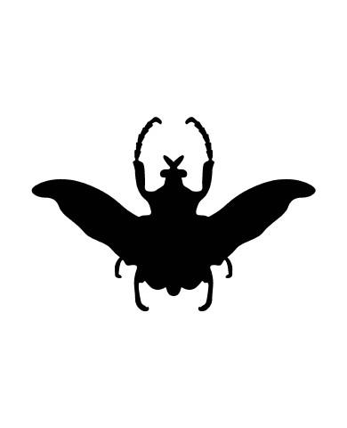 Bug 1 image