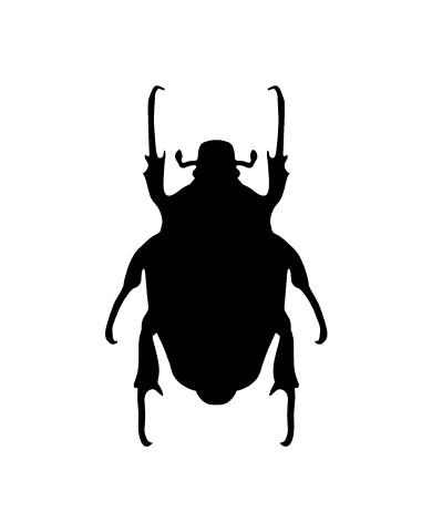 Bug 3 image