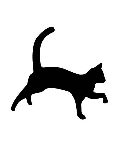 Cat 3 image