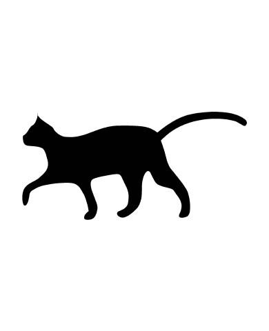 Cat 5 image