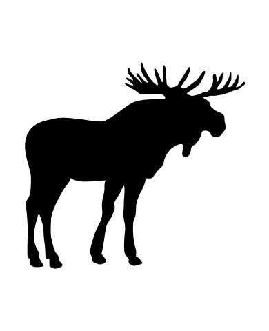 Elk image