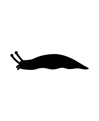 Snail2 image