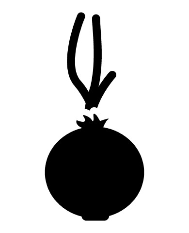Onion image