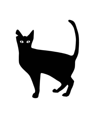 Cat 1 image
