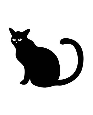 Cat 4 image