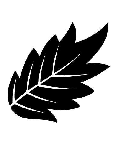 Leaf 12 image