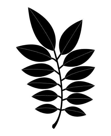 Leaf 25 image