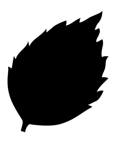 Leaf 26 image