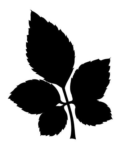 Leaf 29 image