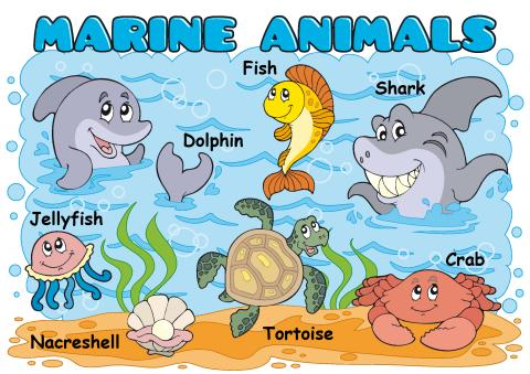 Marine Animals poster template