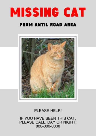 missing cat poster template how to create a missing cat
