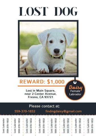 missing dog poster template